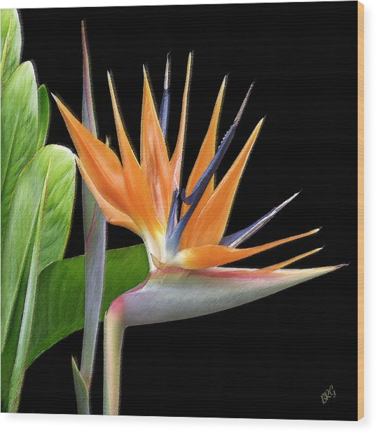 Royal Beauty I - Bird Of Paradise Wood Print
