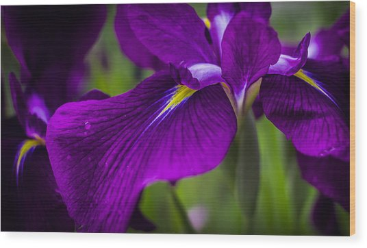Royal Iris Wood Print