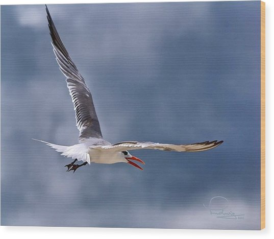 Royal Tern 1 Wood Print