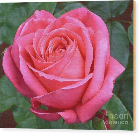Royale Magenta Rose Wood Print