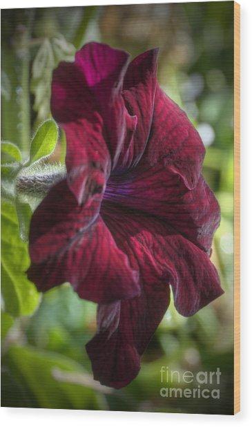 Ruby Red Petunia Wood Print