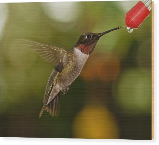 Ruby-throat Hummingbird Wood Print