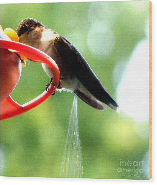 Wood Print featuring the photograph Ruby-throated Hummingbird Pooping by Rose Santuci-Sofranko