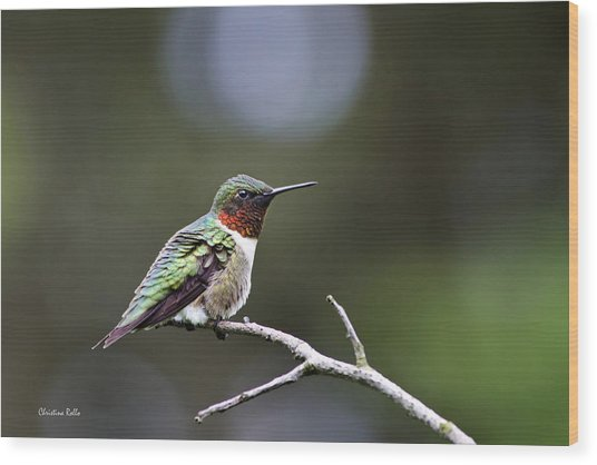 Ruby Throated Hummingbird Spotlight Wood Print