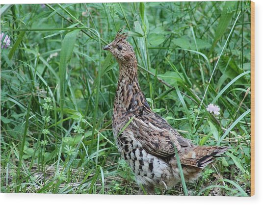 Ruffed Grouse Wood Print by Margo Miller