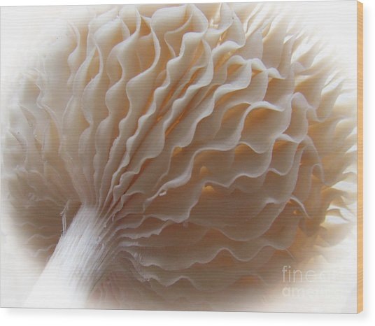 Ruffled And Pretty Or Is It  Pretty Ruffled ?  Wood Print
