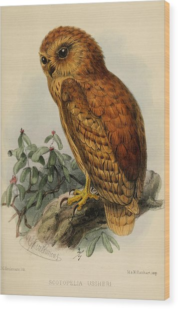 Rufous Fishing Owl Wood Print