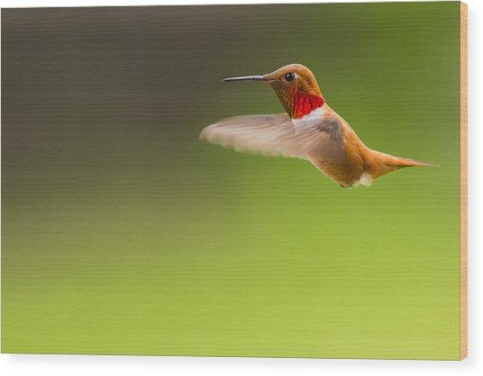 Rufous Hummingbird Male Wood Print