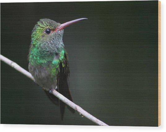 Rufous-tailed Hummingbird Wood Print by Joe Sweeney