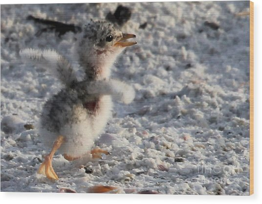Running Free - Least Tern Wood Print
