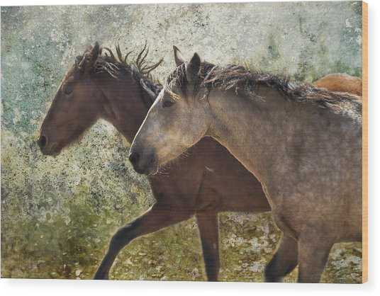 Running Free - Pryor Mustangs Wood Print