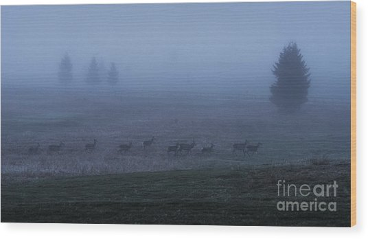 Running In The Mist Wood Print