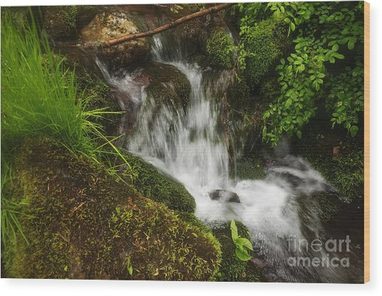 Rushing Mountain Stream And Moss Wood Print
