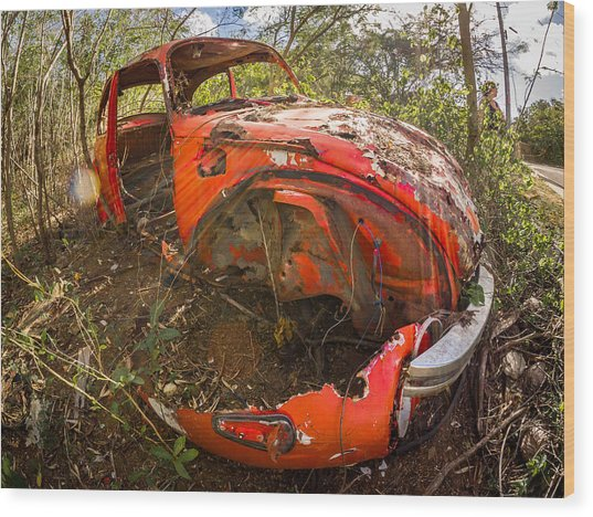 Rusty Beetle Wood Print by Carl Engman