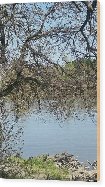 Fall At Sacramento River Scenic Photography Wood Print