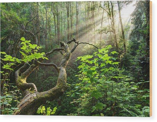 Sacred Grove Wood Print