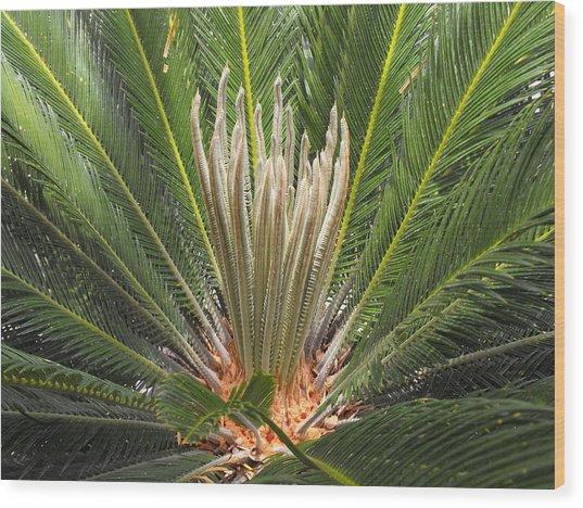 Sago Palm In Bloom Wood Print by Rebecca Cearley