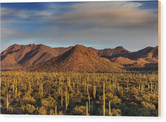 Saguaro Cactus Dominate The Landscape Wood Print by Chuck Haney