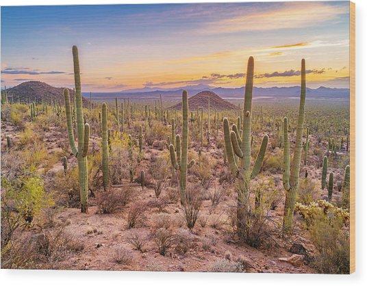 Saguaro Cactus Forest In Saguaro National Park Arizona Wood Print by Benedek
