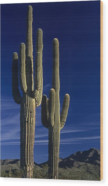 Saguaro Cactus Sunset Arizona State Usa Wood Print
