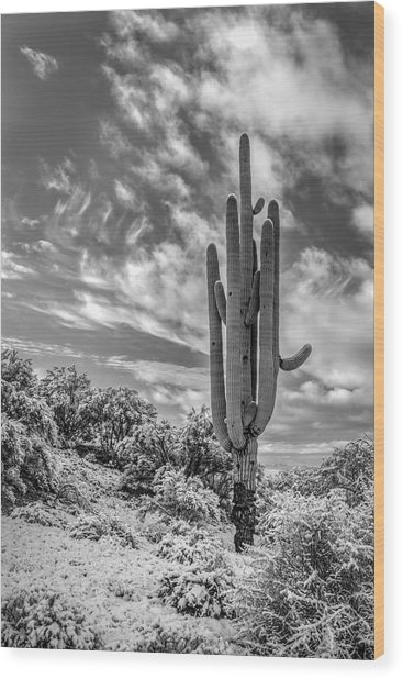 Saguaro In Desert Snow Wood Print
