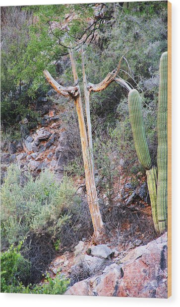 Saguaro Skeleton Wood Print