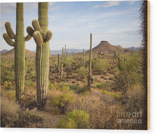 Saguaro Twins Wood Print