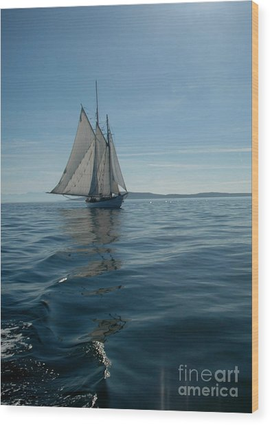 Sail The Blue Wood Print