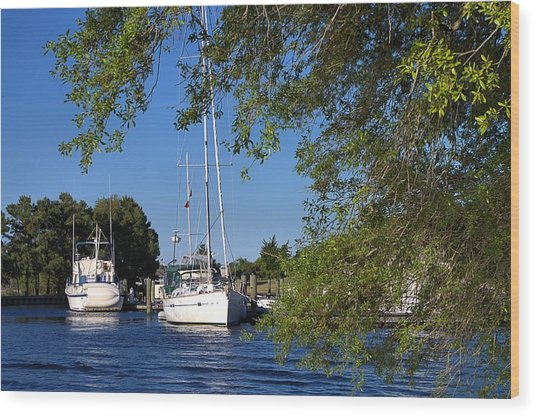 Wood Print featuring the pyrography Sailboat Through Trees by Willard Killough III