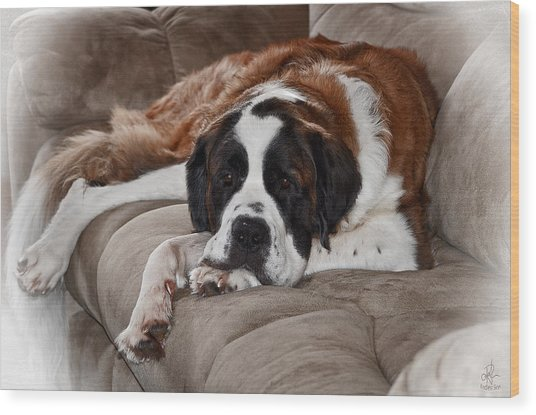 Saint Bernard Wood Print