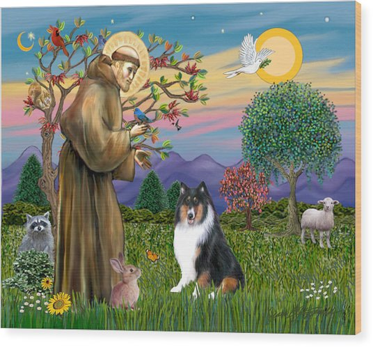 Saint Francis Blesses A Tri Color Collie Wood Print