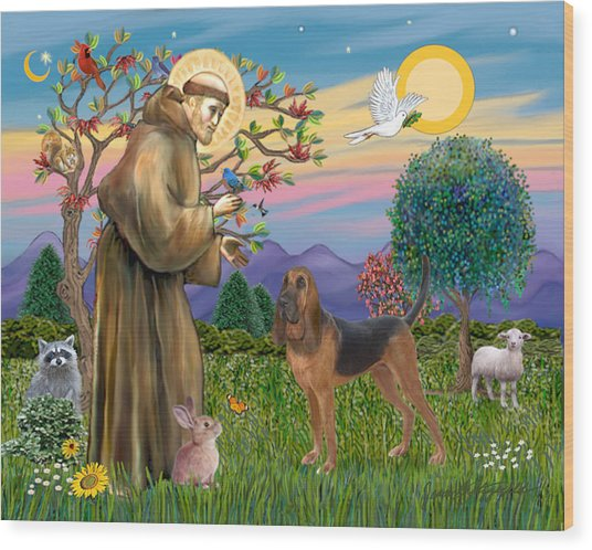 Saint Francis Blessing A Bloodhound Wood Print