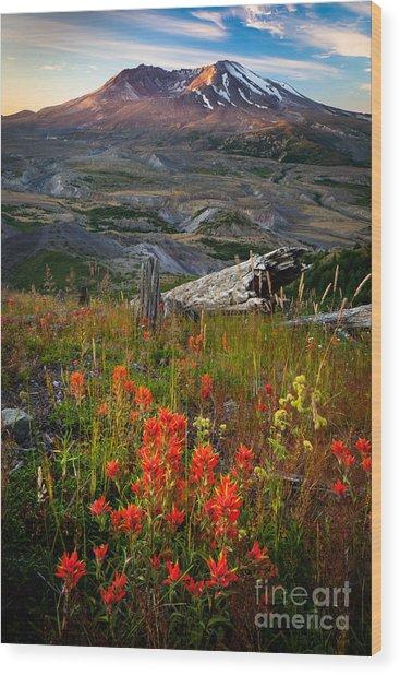 Saint Helens Paintbrushes Wood Print