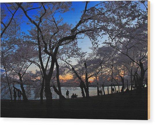 Sakura's Twilight Wood Print by SCB Captures