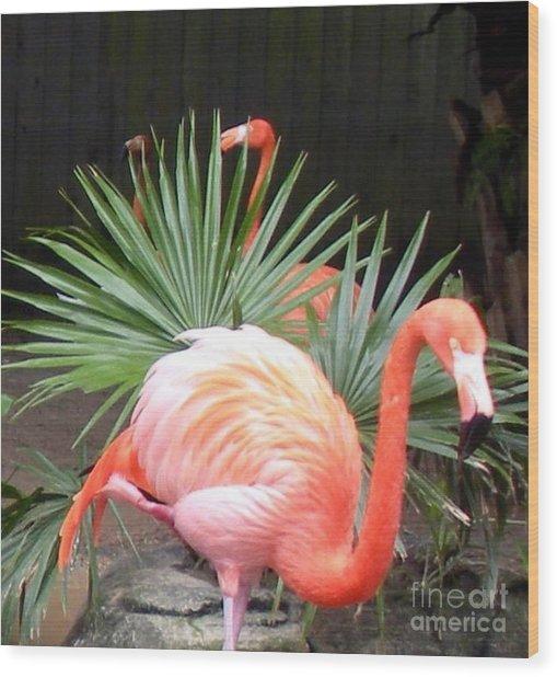 Salmon Flamingos Wood Print