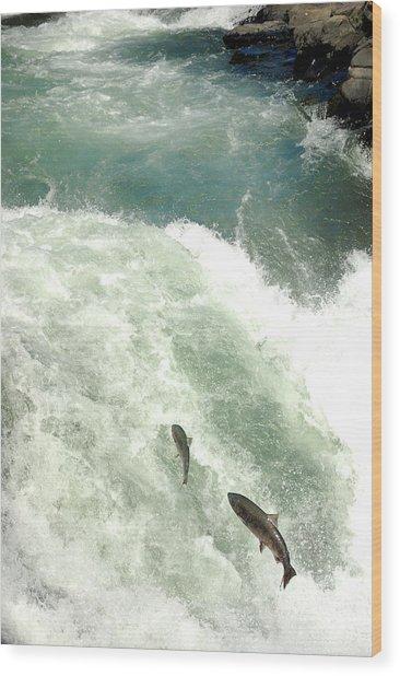 Salmon Run 4 Wood Print by Mamie Gunning