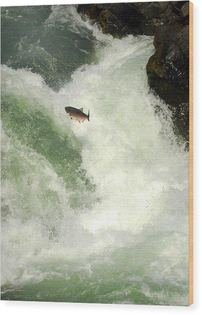 Salmon Run 5 Wood Print by Mamie Gunning