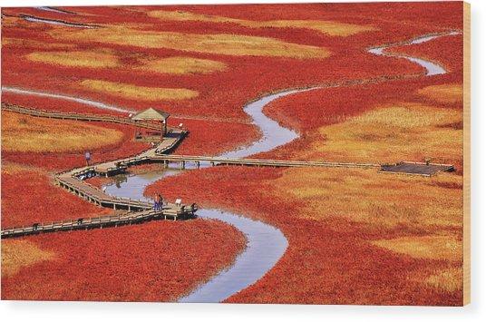 Salt Pond Wood Print by Tiger Seo