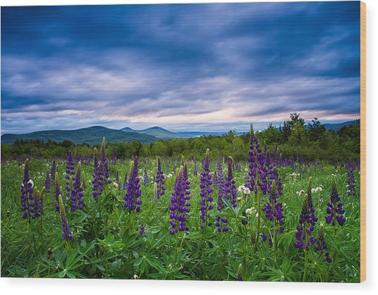 Sampler Field Lupine Wood Print