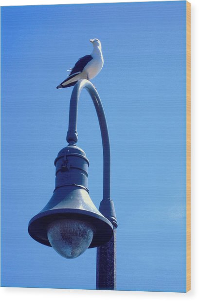San Clemente Sea Gull  Wood Print by Don Struke