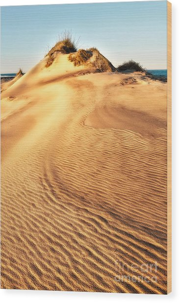 Sand Dune Textures - Outer Banks I Wood Print by Dan Carmichael