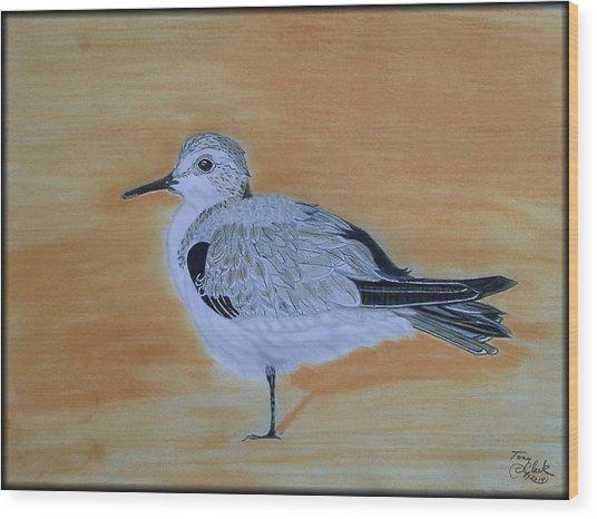 Sanderling Wood Print