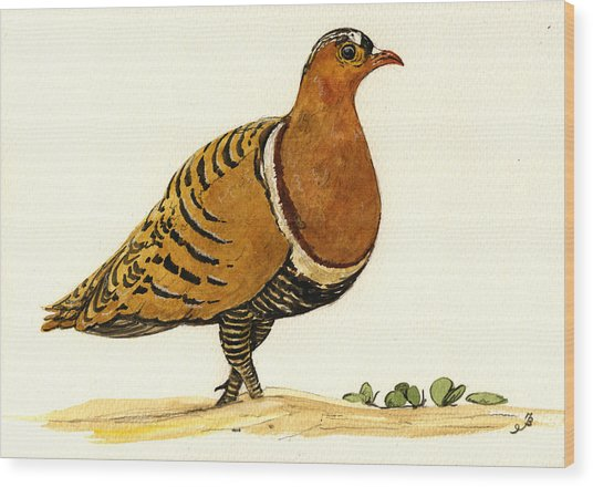 Sandgrouse Wood Print by Juan  Bosco
