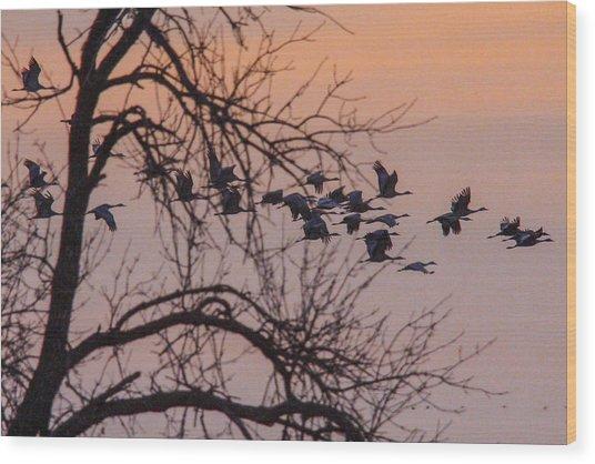 Sandhill Crane Across The Sky Wood Print by Jill Bell