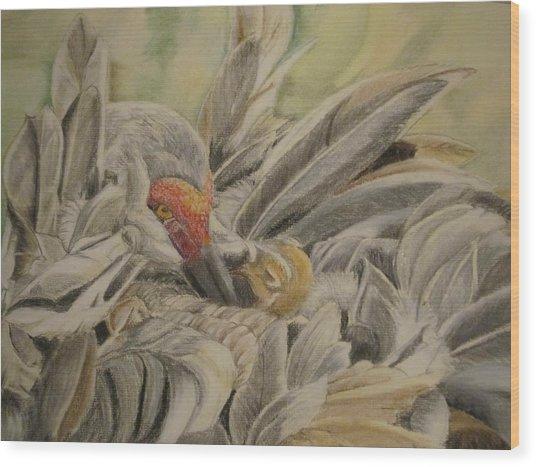 Sandhill Crane And Chick Wood Print