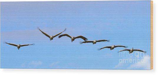 Sandhill Crane Flight Pattern Wood Print