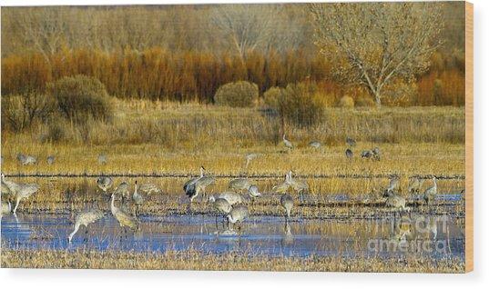 Sandhill Flock In Fall Wood Print