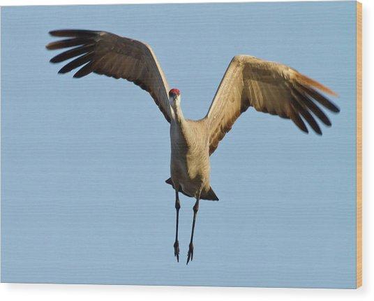 Sandhill Crane (grus Canadensis Wood Print