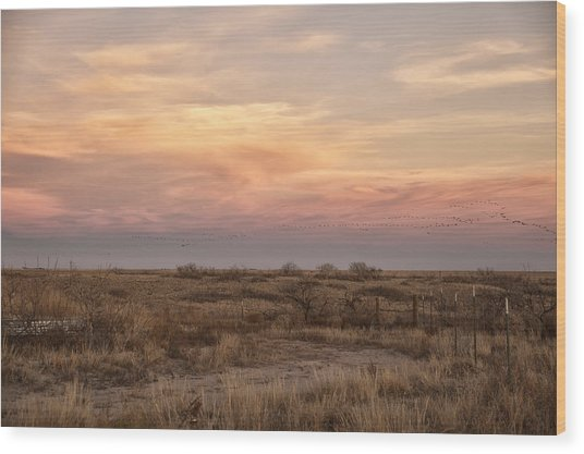 Sandhill Cranes At Sunset Wood Print