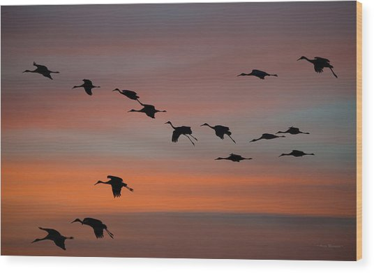 Sandhill Cranes Landing At Sunset Wood Print